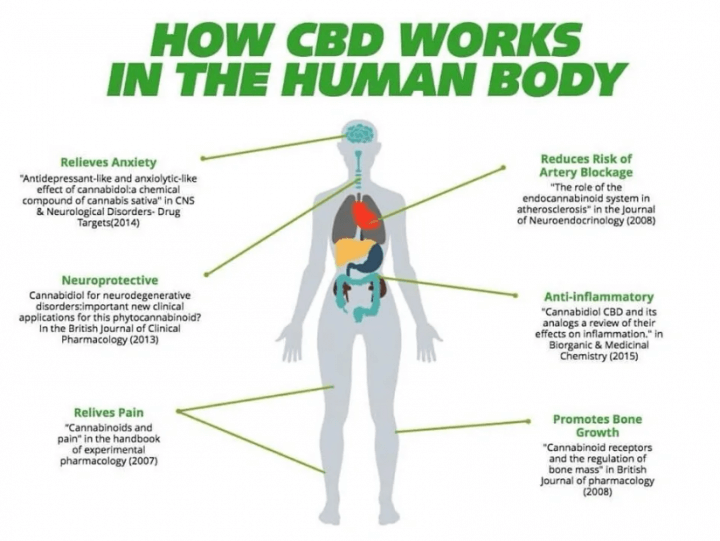 THC/CBD/CBN/CBC/CBG definitions & effects Part I